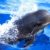 Excursiones y Rutas para ver delfines en Mazarrón. Irconniños.com