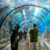 Taquilla Online Aquarium Barcelona