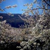 Valle del Jerte con niños. Descubre Extremadura en familia